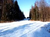 Winter Forest Road.JPG Stock Photos