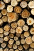 logs from a tree on timber cutting. - stock photo