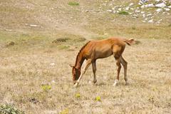 Stock Photo of foal