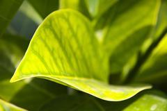 Stock Photo of plant