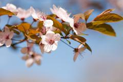 beautiful delicate early spring flowers. - stock photo