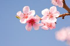 beautiful spring flowers with clear blue sky. - stock photo