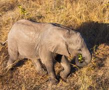 High angle view of baby elephant Stock Photos