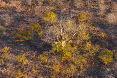Stock Photo of savanna from the air