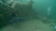 Conger eel cave Stock Footage
