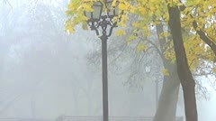 Lights in the fog and falling leaves Stock Footage