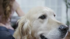 Loveable family dog in close up Stock Footage