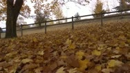 Stock Video Footage of Fallen leaves R 01 by dwking