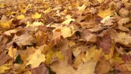 Stock Video Footage of Fallen leaves track L 01 by dwking