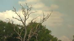 Death Tree Smoke Stock Footage