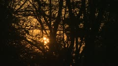 Sunrise Trough Trees Branches Stock Footage