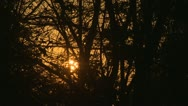 Stock Video Footage of Sunrise Trough Trees Branches