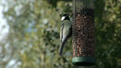 Great tit and blue tit on feeder Stock Footage