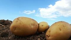 Potato farm in the field Stock Footage