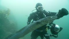 Diver pets conger eel Stock Footage