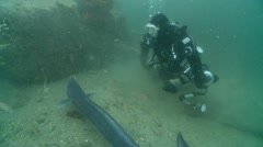 Diver & conger 2 eels Stock Footage