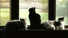 Cats Watching Birds Stock Footage