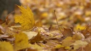 Stock Video Footage of Leaves track L 01 by dwking