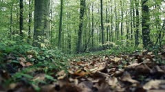 Forest walking autumn 4 Stock Footage