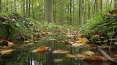 Forest walking autumn 8 Stock Footage
