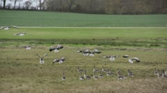 Birds landing in slowmotion Stock Footage