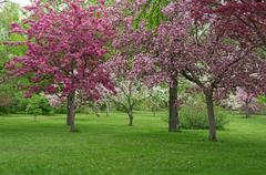 Beautiful blooming orchard Stock Photos