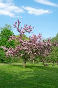 Blooming tree on a green lawn - stock photo