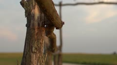 Ranch Gate - Country Life Stock Footage