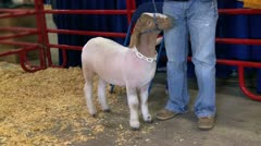 Fair show goat Stock Footage