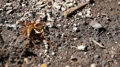 Red ants army Stock Footage