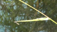 Spiderweb on cane zoom out Stock Footage