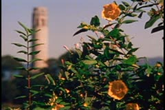 San Francisco, 1970's, Coit Tower, close up, follow focus from foliage Stock Footage