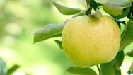 Stock Video Footage of Yellow apple.