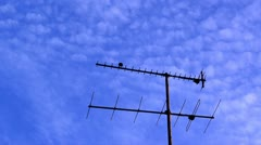Bird leaving antenna Stock Footage