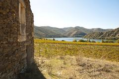 Stock Photo of vineyards at douro river valley, portugal