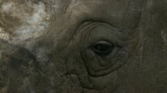Stock Video Footage of white rhino 1