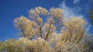 Stock Video Footage of Autumn trees shaken wind 02
