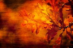 Leaf textured Stock Photos