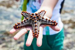 holding a starfish - stock photo