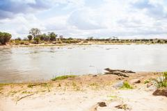 kenian crocodiles - stock photo