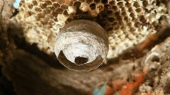 Wasp in Nest Stock Footage