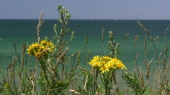 Beautiful Yellow Flowers at the Baltic Sea - Northern Germany. Stock Footage