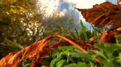 Autumn leaves on the ground, Shropshire Stock Footage