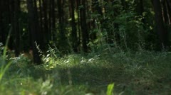 Panorama Of Beach Forest Stock Footage