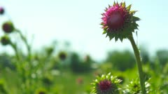 Spring morning meadow Stock Footage