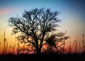Stock Photo of sunset through the barren trees