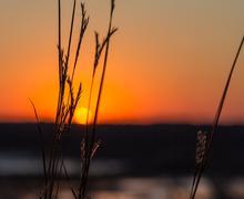 Setting sun through the prairie grass Stock Photos