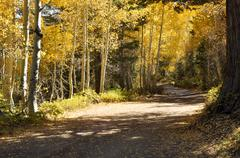 autumn trees and dirt road - stock photo