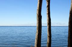 Three pine trunks at coast Stock Photos