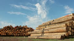 Timber logs in the forest Stock Footage